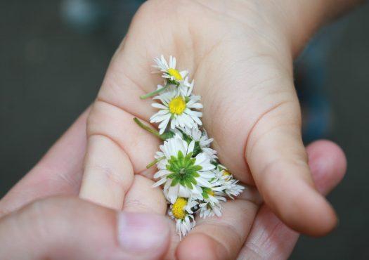 daisies-2282605_1920